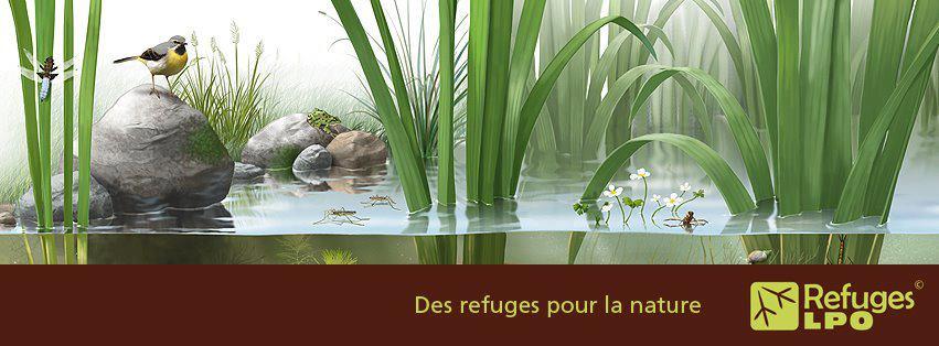 https://cdnfiles1.biolovision.net/franche-comte.lpo.fr/userfiles/proteger/64095361397530548773171091707n.jpg