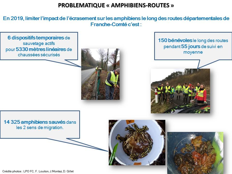 https://cdnfiles1.biolovision.net/franche-comte.lpo.fr/userfiles/proteger/AmphibiensRoutes/Bilan2019actionssauvetagerteamphFCVDec2019.jpg
