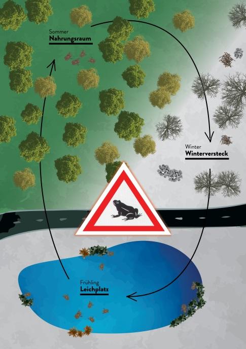 https://cdnfiles1.biolovision.net/franche-comte.lpo.fr/userfiles/proteger/AmphibiensRoutes/SchmaTypeMigrationamphibiensKARCH.jpg