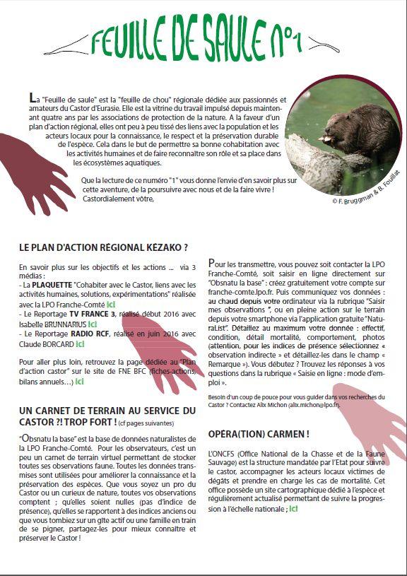 https://cdnfiles1.biolovision.net/franche-comte.lpo.fr/userfiles/proteger/Castor/P1feuillesaule.jpg