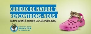 https://cdnfiles1.biolovision.net/vienne.lpo.fr/userfiles/BiodivactDecouvrirGrenouilleVign.jpg