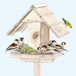 Oiseaux à la mangeoire ©K.Lipovoï