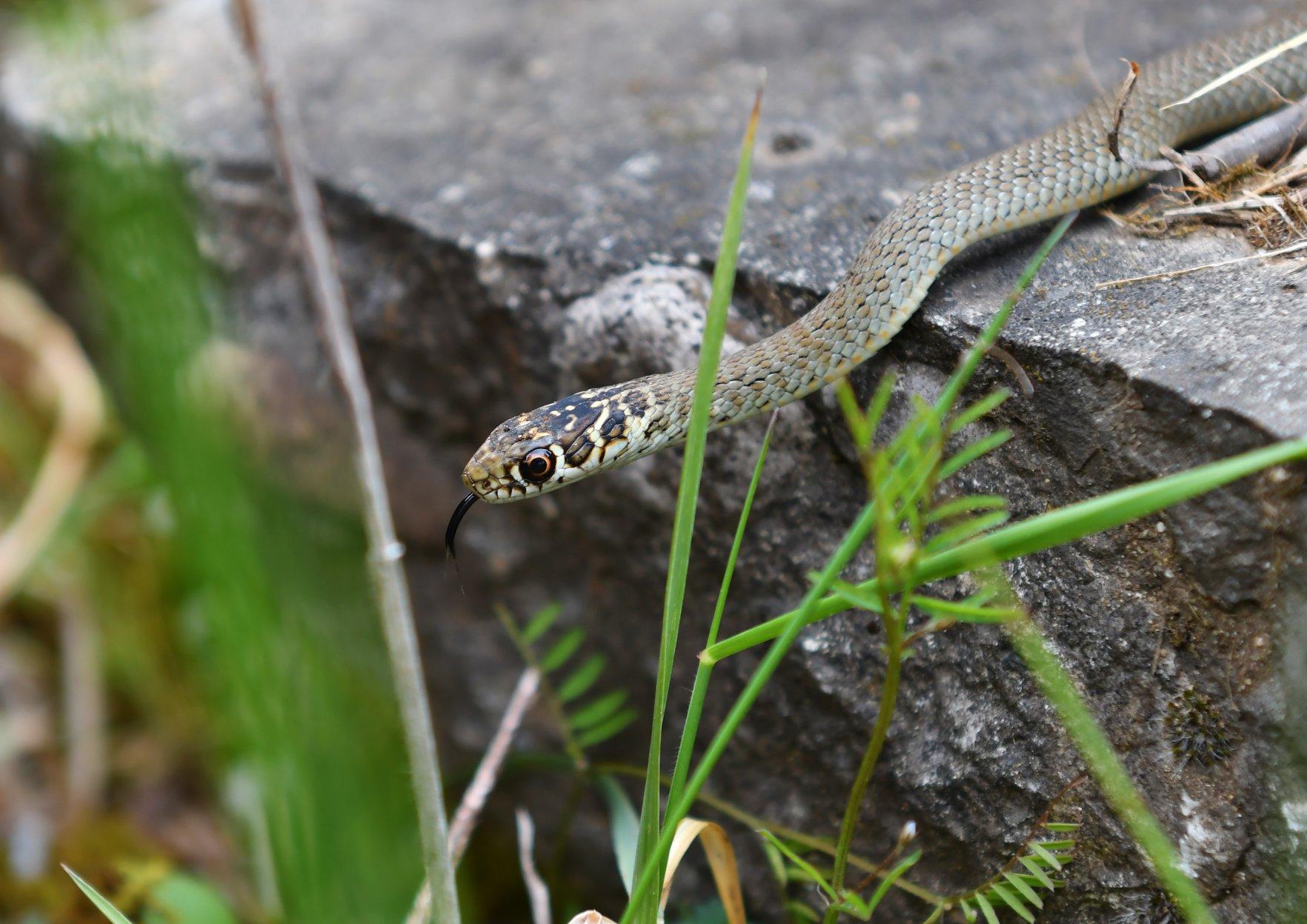 https://cdnfiles1.biolovision.net/www.faune-ain.org/userfiles/3070463416574626576758316232681060476387328o.jpg