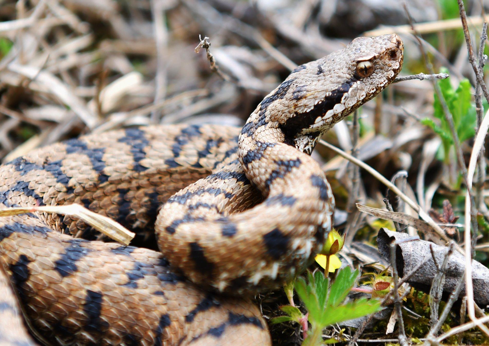 https://cdnfiles1.biolovision.net/www.faune-ain.org/userfiles/3070706716574632343424405608178723850289152o.jpg
