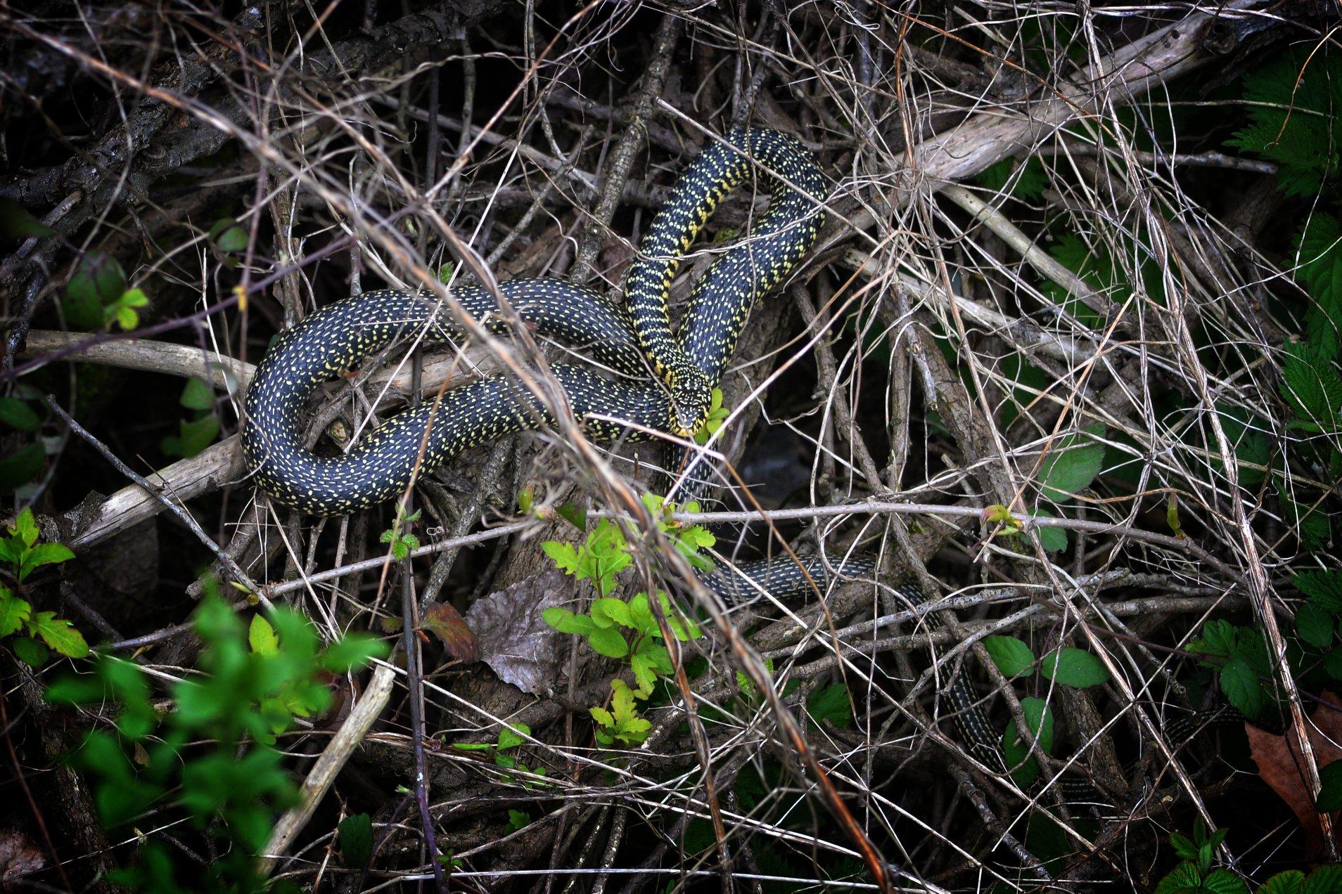 https://cdnfiles1.biolovision.net/www.faune-ain.org/userfiles/3070974816574683543419288155818453274460160o.jpg