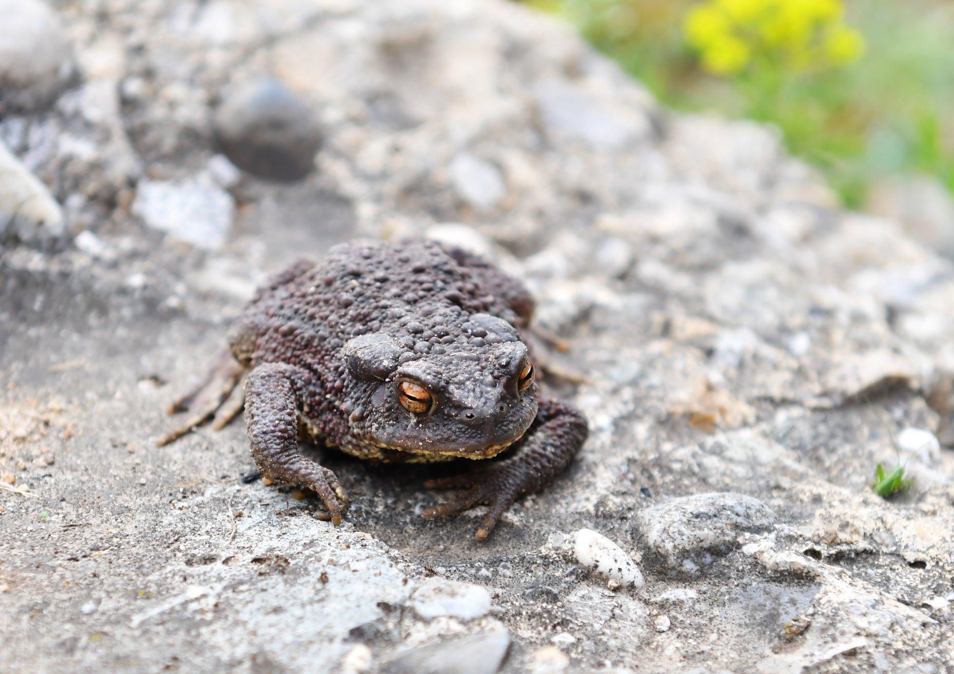 https://cdnfiles1.biolovision.net/www.faune-ain.org/userfiles/3073940316574627243424915424764597900935168o.jpg