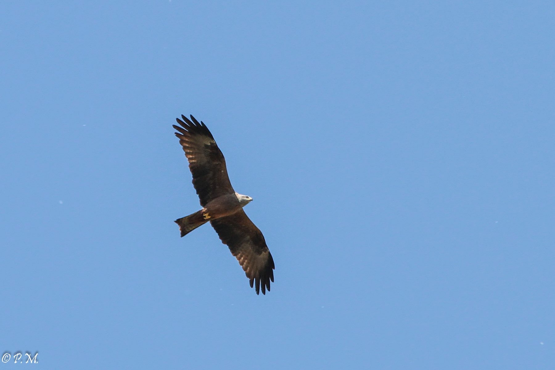 https://cdnfiles1.biolovision.net/www.faune-ain.org/userfiles/GroupeHerpeto/Photossortie/1796606813074870860067258180668229675100041o.jpg