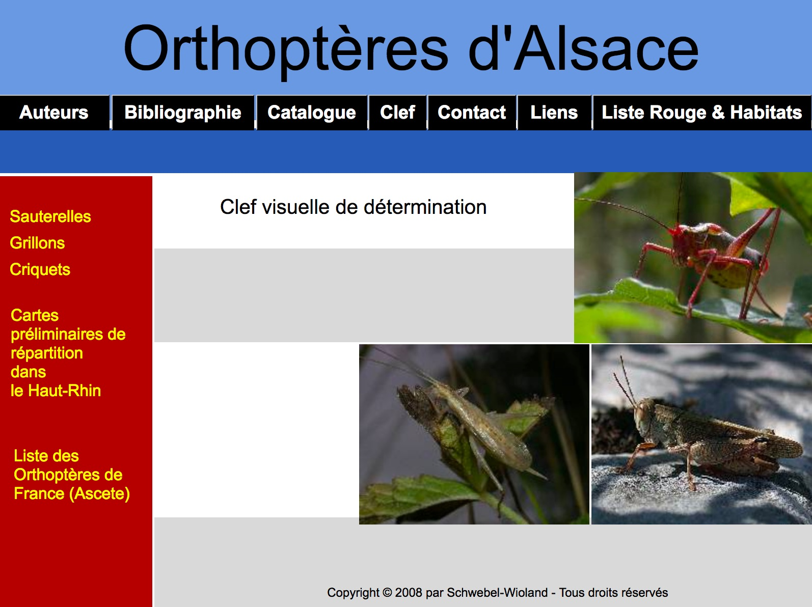 https://cdnfiles1.biolovision.net/www.faune-alsace.org/userfiles/Insectes/ORTHOPTERA/sitewebLS.jpg