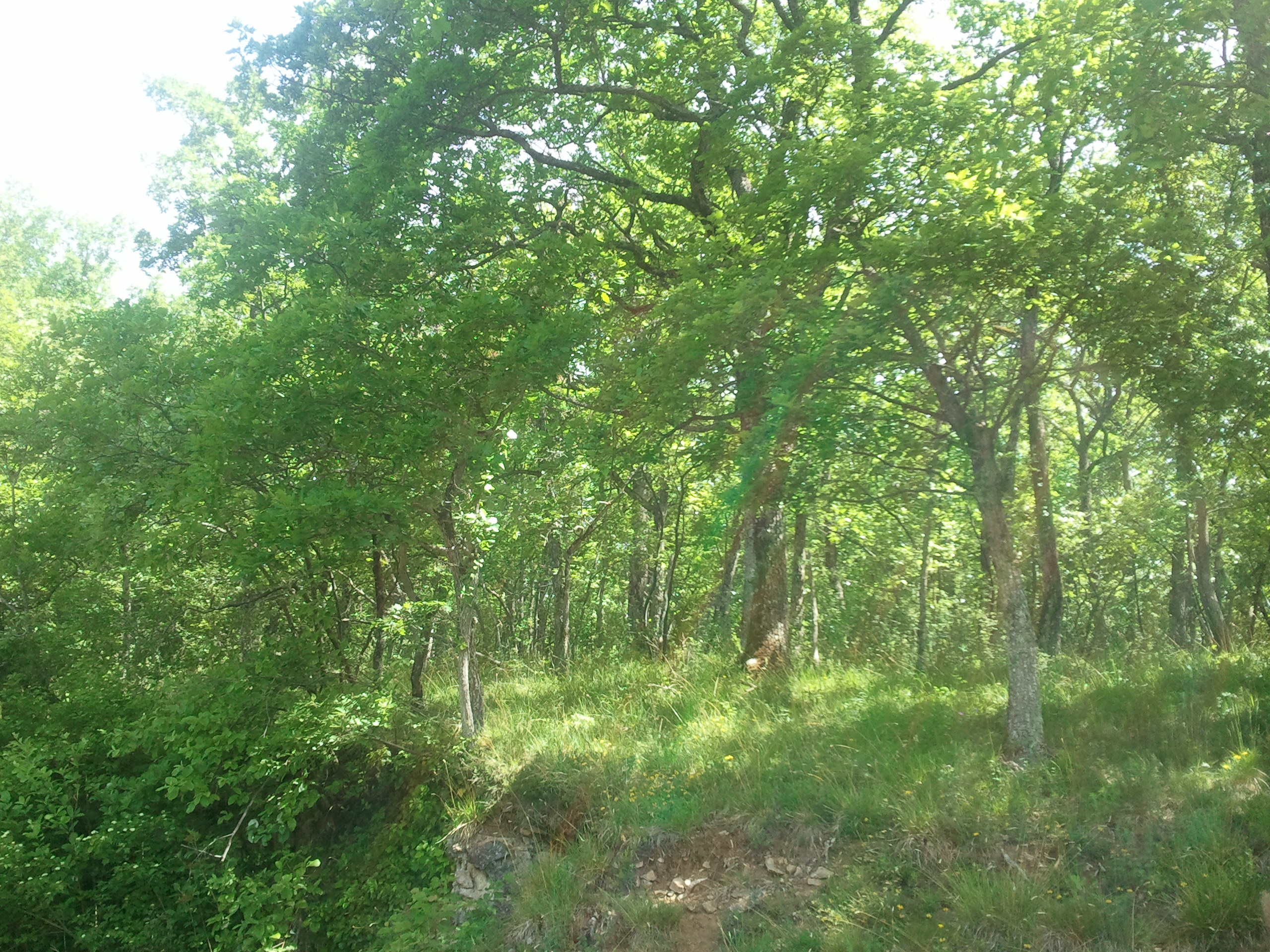 https://cdnfiles1.biolovision.net/www.faune-alsace.org/userfiles/Insectes/cigales/Cicadettamontana-Osenbach-20140522.jpg
