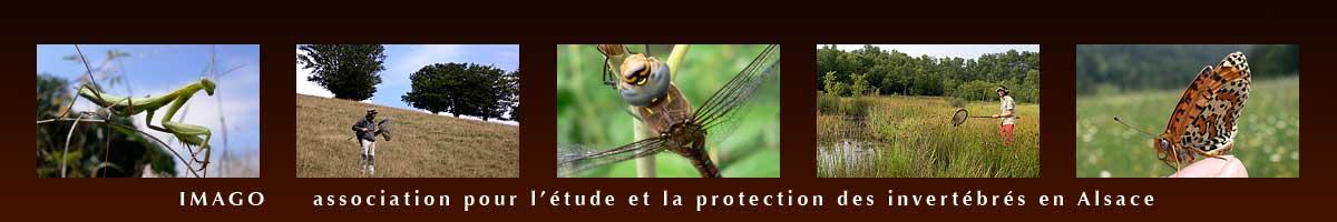 https://cdnfiles1.biolovision.net/www.faune-alsace.org/userfiles/associations/banniereIMAGO.jpg