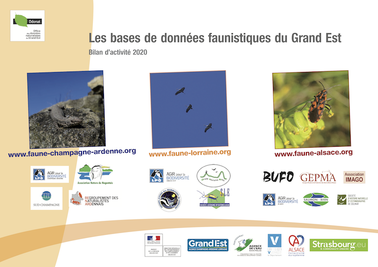 https://cdnfiles1.biolovision.net/www.faune-alsace.org/userfiles/bilan/BilanVisioNatureGE2020.pdf