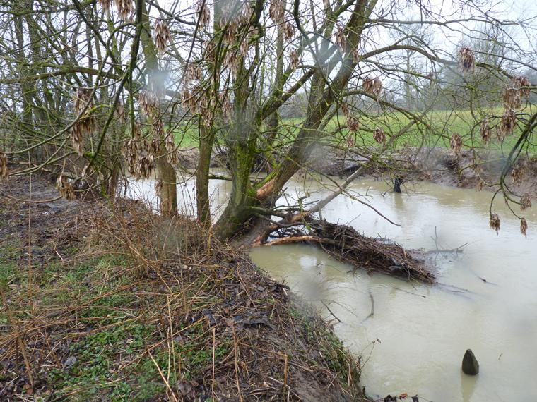 https://cdnfiles1.biolovision.net/www.faune-alsace.org/userfiles/gepma/castor/Ecorcages-sur-saules-Largue-a-Balschwiller-68-fev-2014.jpg