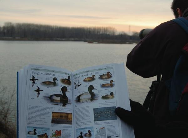 https://cdnfiles1.biolovision.net/www.faune-alsace.org/userfiles/modeemploi/wetlands/wetlands.jpg
