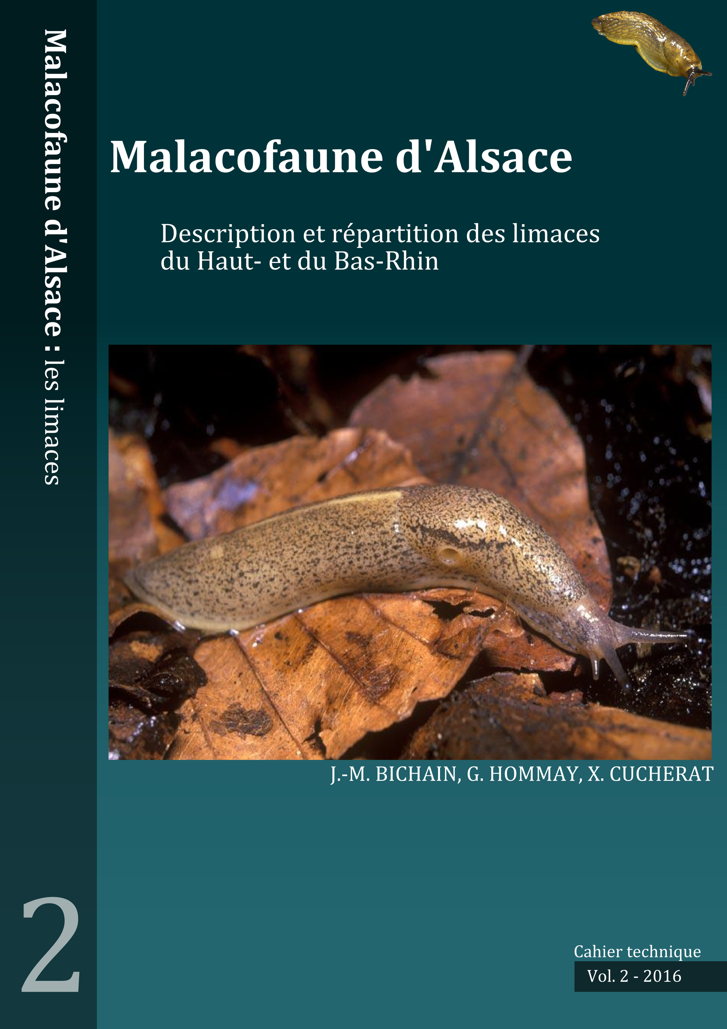 https://cdnfiles1.biolovision.net/www.faune-alsace.org/userfiles/mollusques/limace2016.jpg