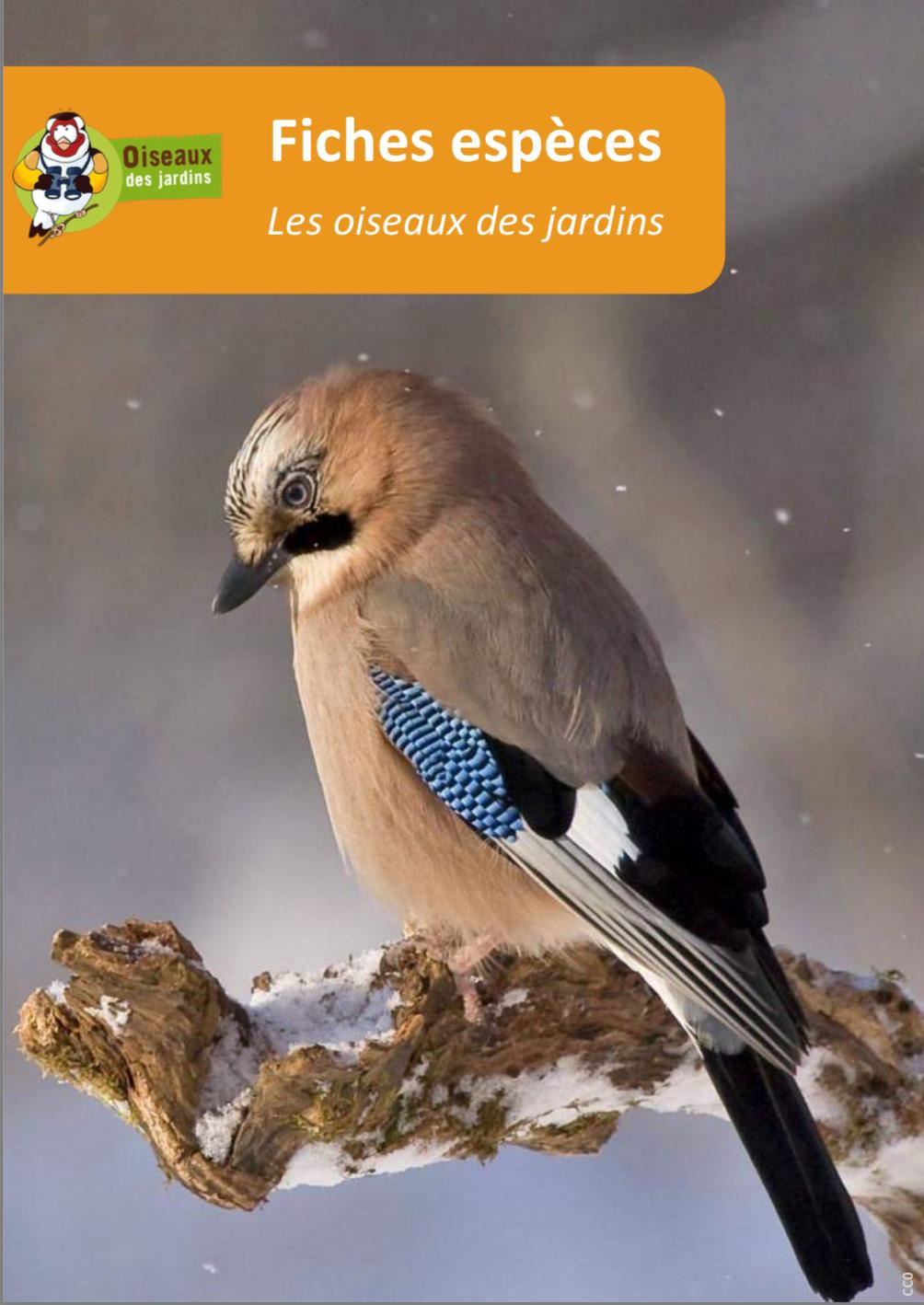 https://cdnfiles1.biolovision.net/www.faune-anjou.org/userfiles/divers/Fichestoutesespces.pdf