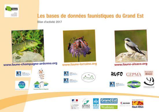 https://cdnfiles1.biolovision.net/www.faune-champagne-ardenne.org/userfiles/Bilandactivite/BilanVisioNatureGE2017-8639.jpg