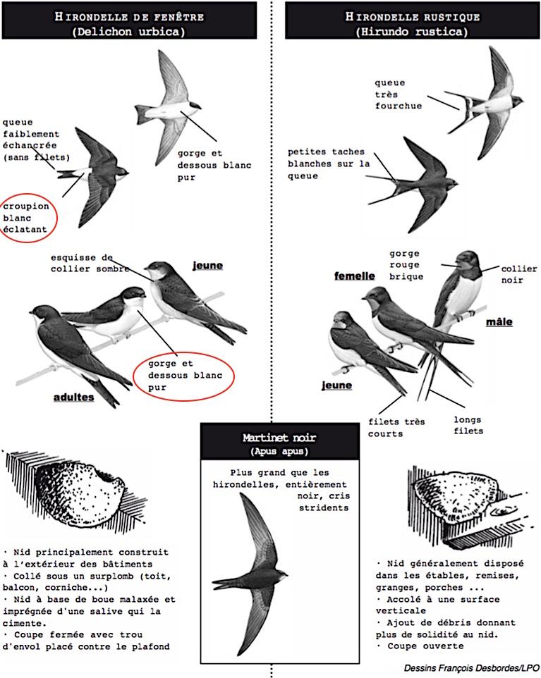 https://cdnfiles1.biolovision.net/www.faune-champagne-ardenne.org/userfiles/OiseauDeLAnnee/DistinctionHFHR.jpg