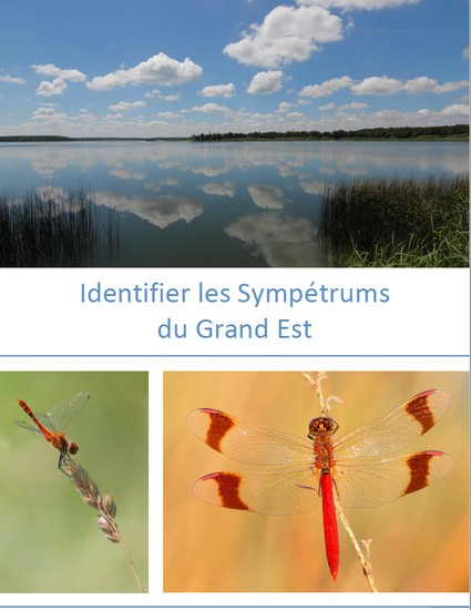 https://cdnfiles1.biolovision.net/www.faune-champagne-ardenne.org/userfiles/odonates/identificationsympetrums.jpg