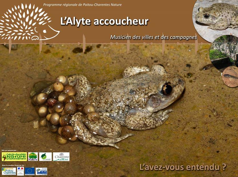 https://cdnfiles1.biolovision.net/www.faune-charente-maritime.org/userfiles/AlyteCapture.JPG