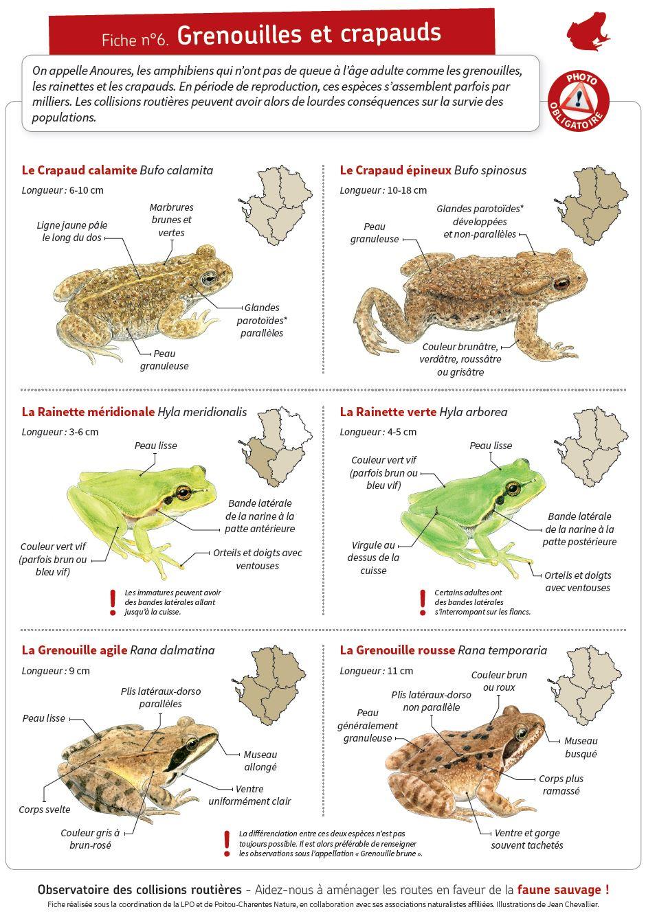 https://cdnfiles1.biolovision.net/www.faune-charente-maritime.org/userfiles/Fauneetroute/Capturegrenouillecrapauds.JPG