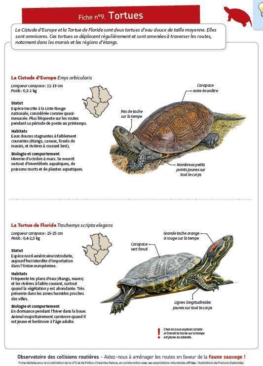https://cdnfiles1.biolovision.net/www.faune-charente-maritime.org/userfiles/Fauneetroute/Capturetortue.JPG