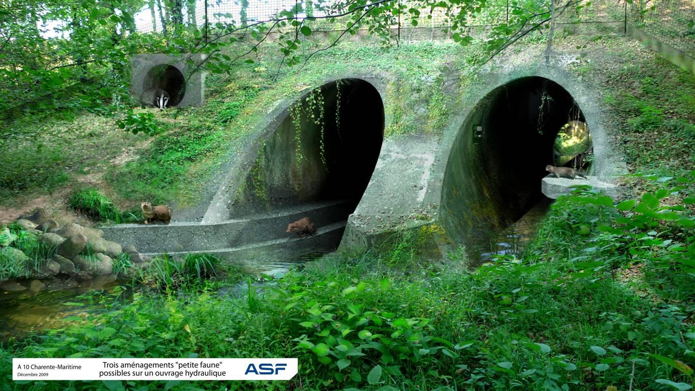 https://cdnfiles1.biolovision.net/www.faune-charente-maritime.org/userfiles/Fauneetroute/Passagesouterrain.jpg