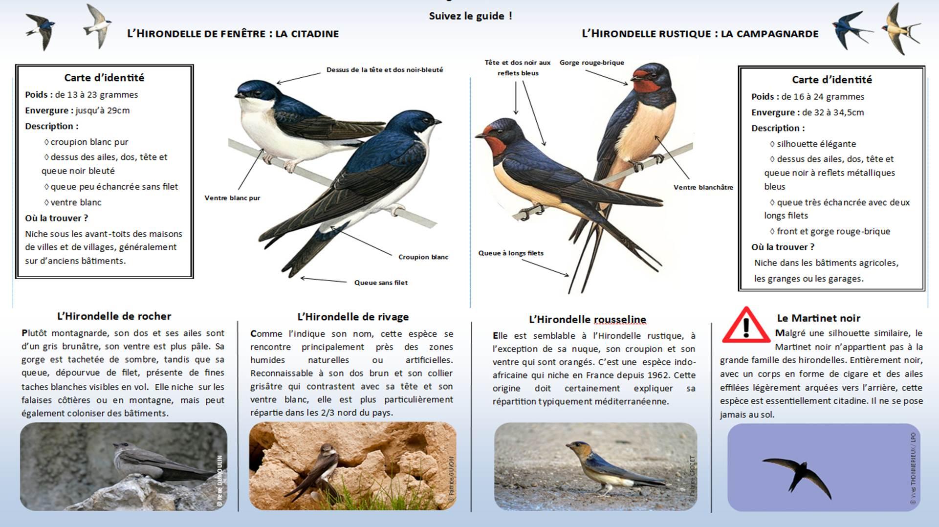 https://cdnfiles1.biolovision.net/www.faune-charente-maritime.org/userfiles/Identifier-les-hironelles-du-bti.jpg