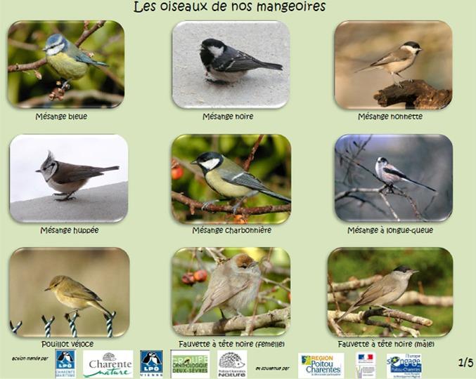https://cdnfiles1.biolovision.net/www.faune-charente-maritime.org/userfiles/Oiso/Oiseauxdesjardins.jpg