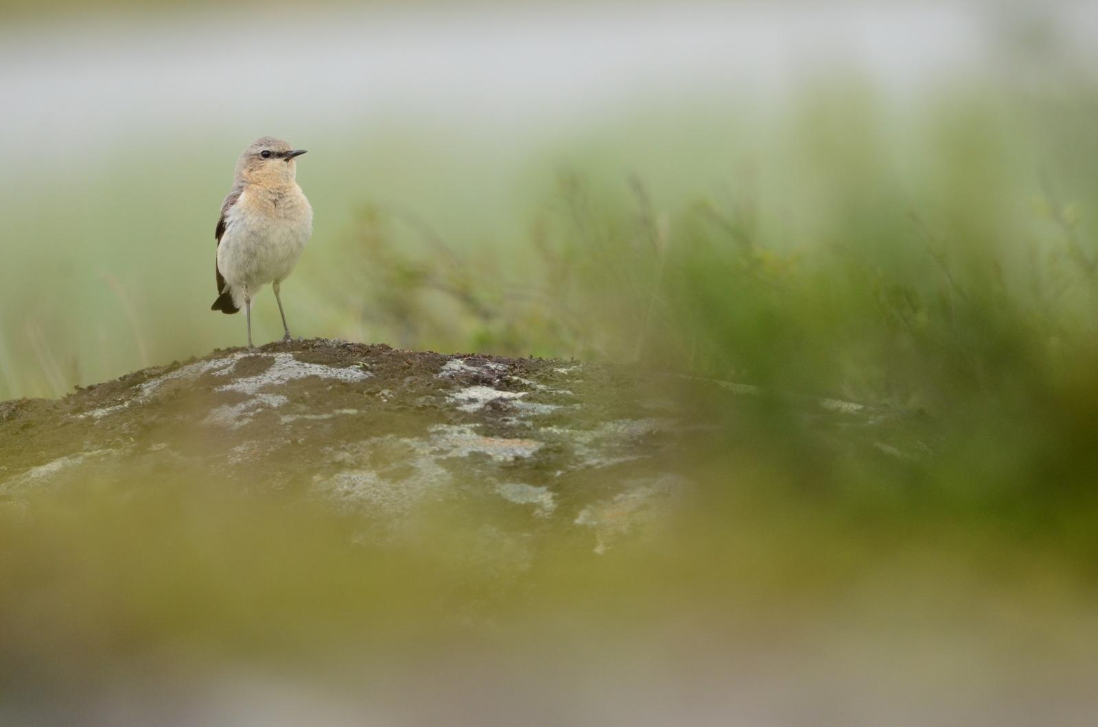 https://cdnfiles1.biolovision.net/www.faune-drome.org/userfiles/photo/DSC38751.JPG