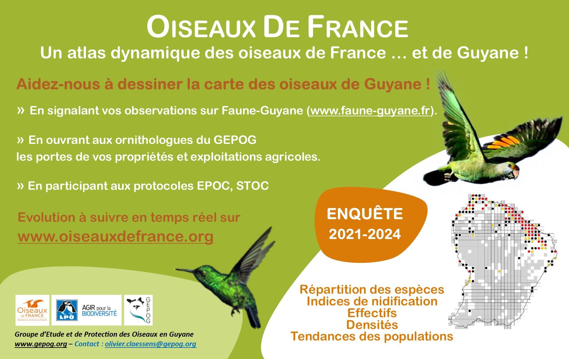 https://cdnfiles1.biolovision.net/www.faune-guyane.fr/userfiles/Documentsdivers/Oiseaux/AFFICHEODFclaire.jpg