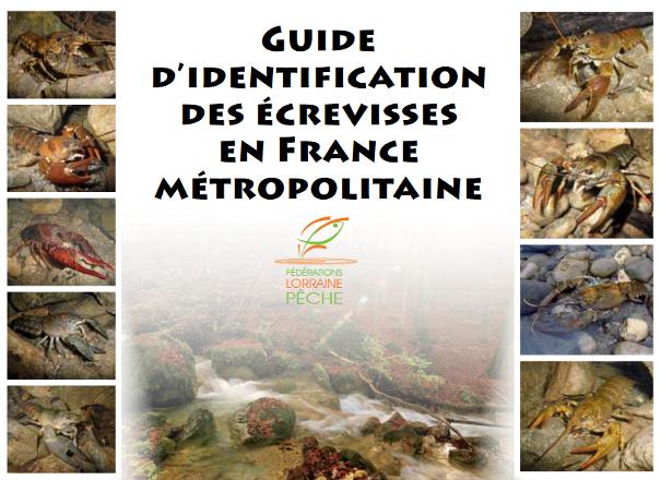 https://cdnfiles1.biolovision.net/www.faune-limousin.eu/userfiles/Crustaces/miniatureguidecrevissesLorrainelight.png