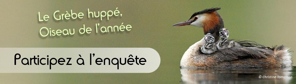 https://cdnfiles1.biolovision.net/www.faune-lorraine.org/userfiles/GREBE2019/Bandeausignaturemailsanslogo.jpg