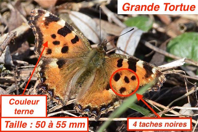 https://cdnfiles1.biolovision.net/www.faune-lorraine.org/userfiles/GrandeTortueFMH.jpg