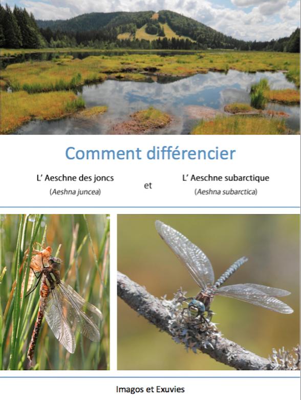 https://cdnfiles1.biolovision.net/www.faune-lorraine.org/userfiles/ODONATES/Documentsdidentification/Capturedecran2018-08-09a14.18.06.png
