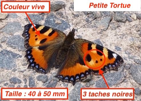 https://cdnfiles1.biolovision.net/www.faune-lorraine.org/userfiles/PetiteTortueLT.jpg