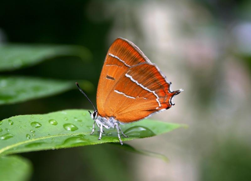 https://cdnfiles1.biolovision.net/www.faune-maine.org/userfiles/DaniellandemaineThclabouleau3.JPG
