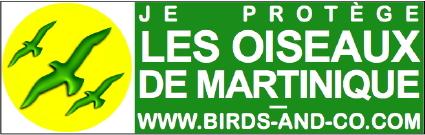 https://cdnfiles1.biolovision.net/www.faune-martinique.org/userfiles/Sticker425.jpg