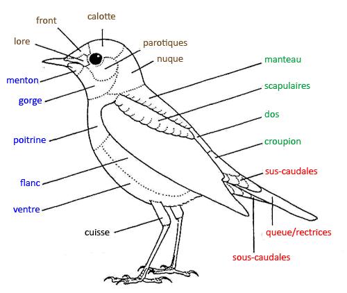 https://cdnfiles1.biolovision.net/www.faune-reunion.fr/userfiles/lecoindunaturaliste/topo2oiseaucopy.jpg