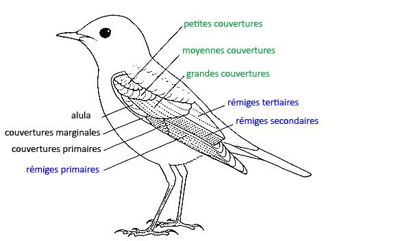 https://cdnfiles1.biolovision.net/www.faune-reunion.fr/userfiles/lecoindunaturaliste/topooiseau.jpg