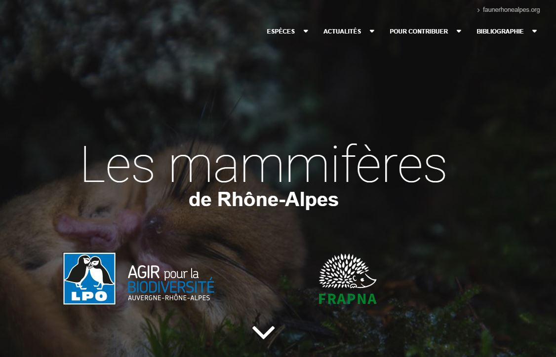 https://cdnfiles1.biolovision.net/www.faune-rhone.org/userfiles/Documents/AtlasMammif/CaptureAccueilPortailMammif.JPG