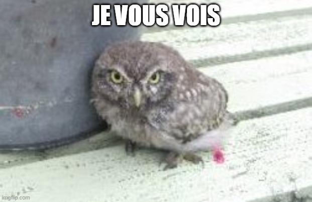 https://cdnfiles1.biolovision.net/www.faune-rhone.org/userfiles/Documents/Illustrationsnews/ChevecheJeVousVois.jpg