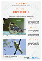 https://cdnfiles1.biolovision.net/www.faune-rhone.org/userfiles/OiseauxDesJardins/Fichesidentification/FICHESCOMPARATIVES01Jeunesmsanges.jpg
