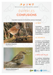 https://cdnfiles1.biolovision.net/www.faune-rhone.org/userfiles/OiseauxDesJardins/Fichesidentification/FICHESCOMPARATIVES02Moineauaccenteur.jpg