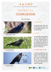 https://cdnfiles1.biolovision.net/www.faune-rhone.org/userfiles/OiseauxDesJardins/Fichesidentification/FICHESCOMPARATIVES03Corvids.jpg