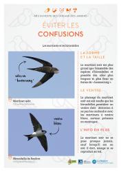 https://cdnfiles1.biolovision.net/www.faune-rhone.org/userfiles/OiseauxDesJardins/Fichesidentification/FICHESCOMPARATIVES05Martinethirondelle.jpg