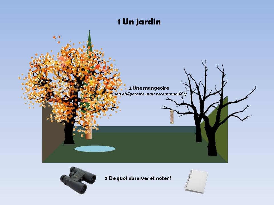 https://cdnfiles1.biolovision.net/www.faune-rhone.org/userfiles/OiseauxDesJardins/TutoProtocole/PresentationProtocole1.JPG