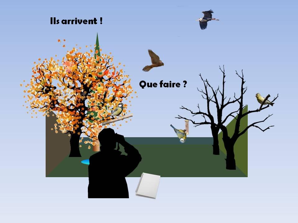 https://cdnfiles1.biolovision.net/www.faune-rhone.org/userfiles/OiseauxDesJardins/TutoProtocole/PresentationProtocole2.JPG
