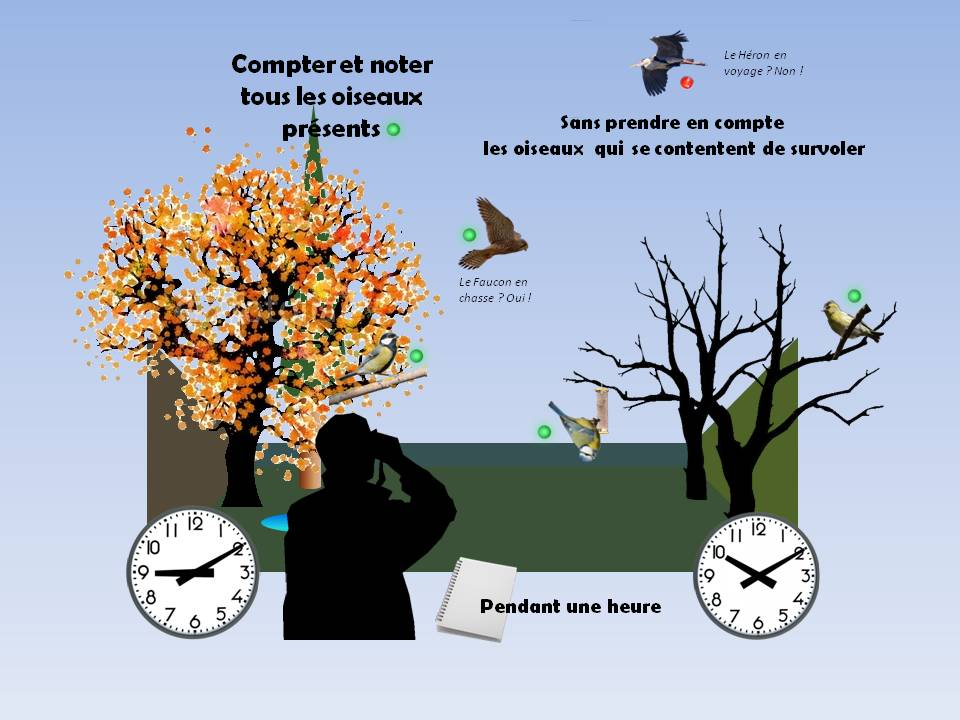 https://cdnfiles1.biolovision.net/www.faune-rhone.org/userfiles/OiseauxDesJardins/TutoProtocole/PresentationProtocole3.JPG