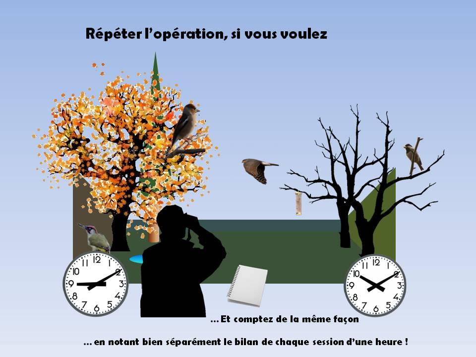 https://cdnfiles1.biolovision.net/www.faune-rhone.org/userfiles/OiseauxDesJardins/TutoProtocole/PresentationProtocole4.JPG