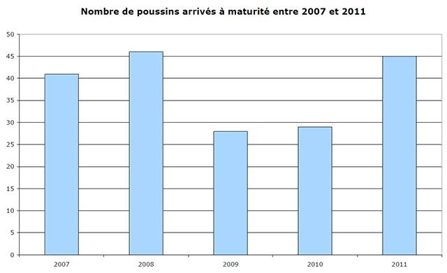 Faucon crécerelle poussins 2006-2011